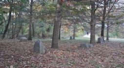 Beneath the trees, beside the stones