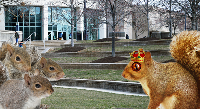All hail Bobita III, god-king of the UMBC Squirrels.  ALL HAIL.