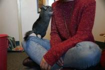 Furry friends offer comfort, camaraderie