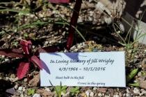 Jill Wrigley, INDS program advisor and general associate, dies