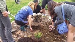 Green thumbs for a greener earth